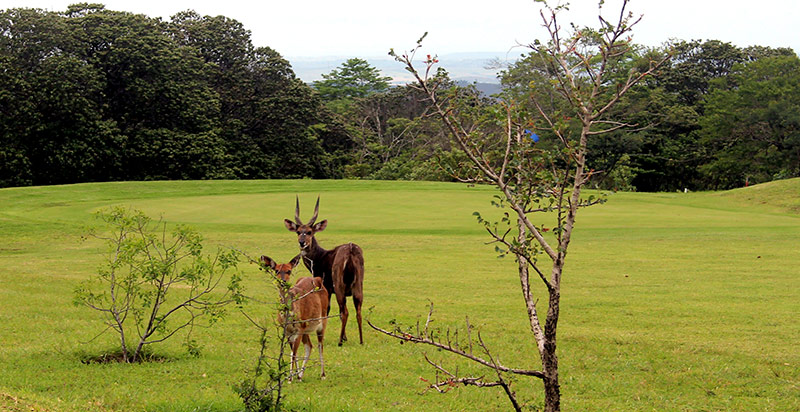 Life-on-the-estate-buck